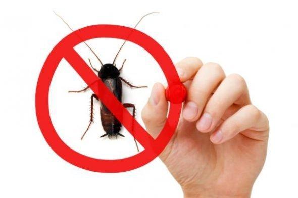 Cum sa-ti protejezi casa de insecte, vara